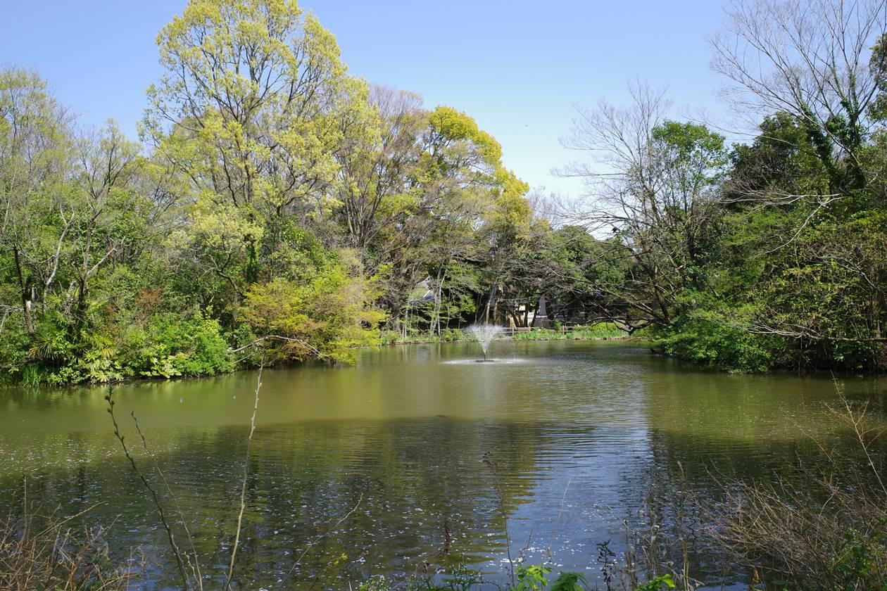 和田堀公園の池