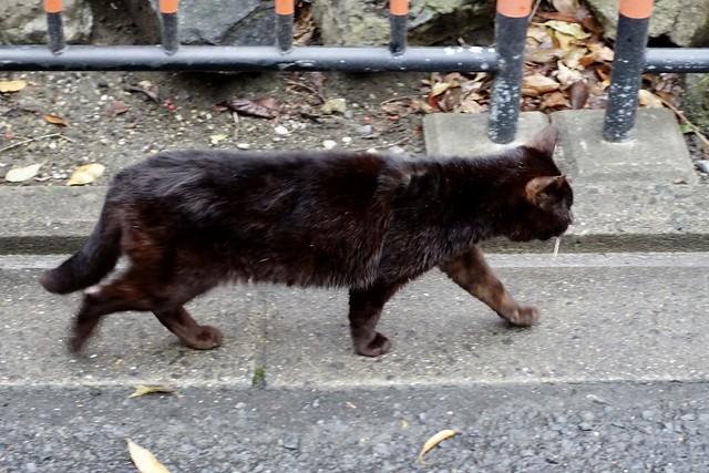Today's Cat@2020ー04ー04