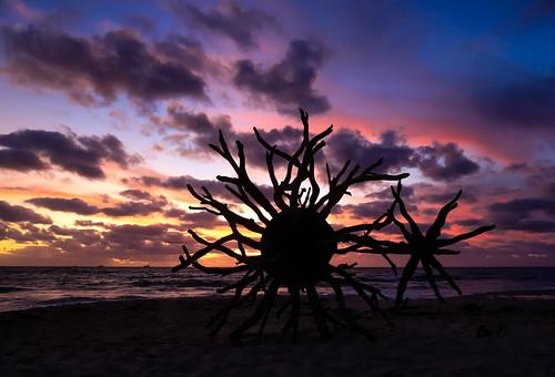 coronavirus cottesloe beach art sculptures sea sunset