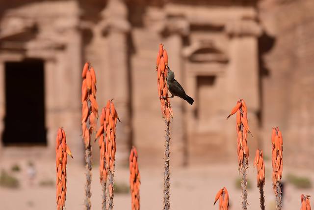 Petra, Jordan, June_2019_090