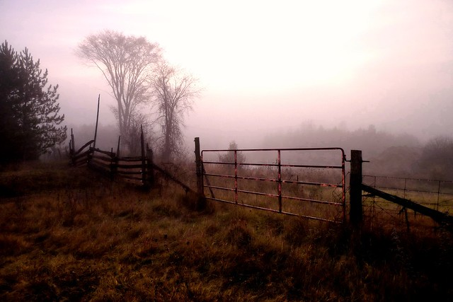 Rusted Gate at Two Oaks