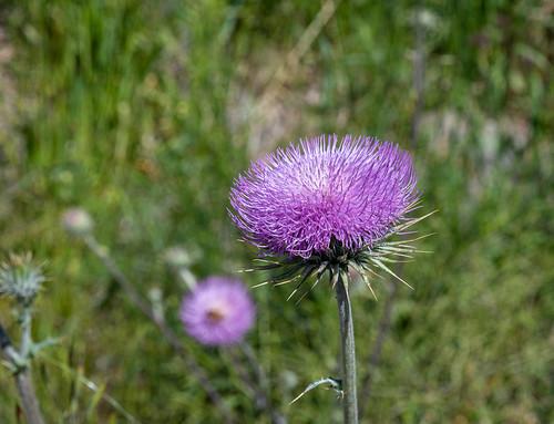 wildflowers_20200403_130