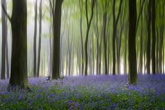 'Spirit of Spring'