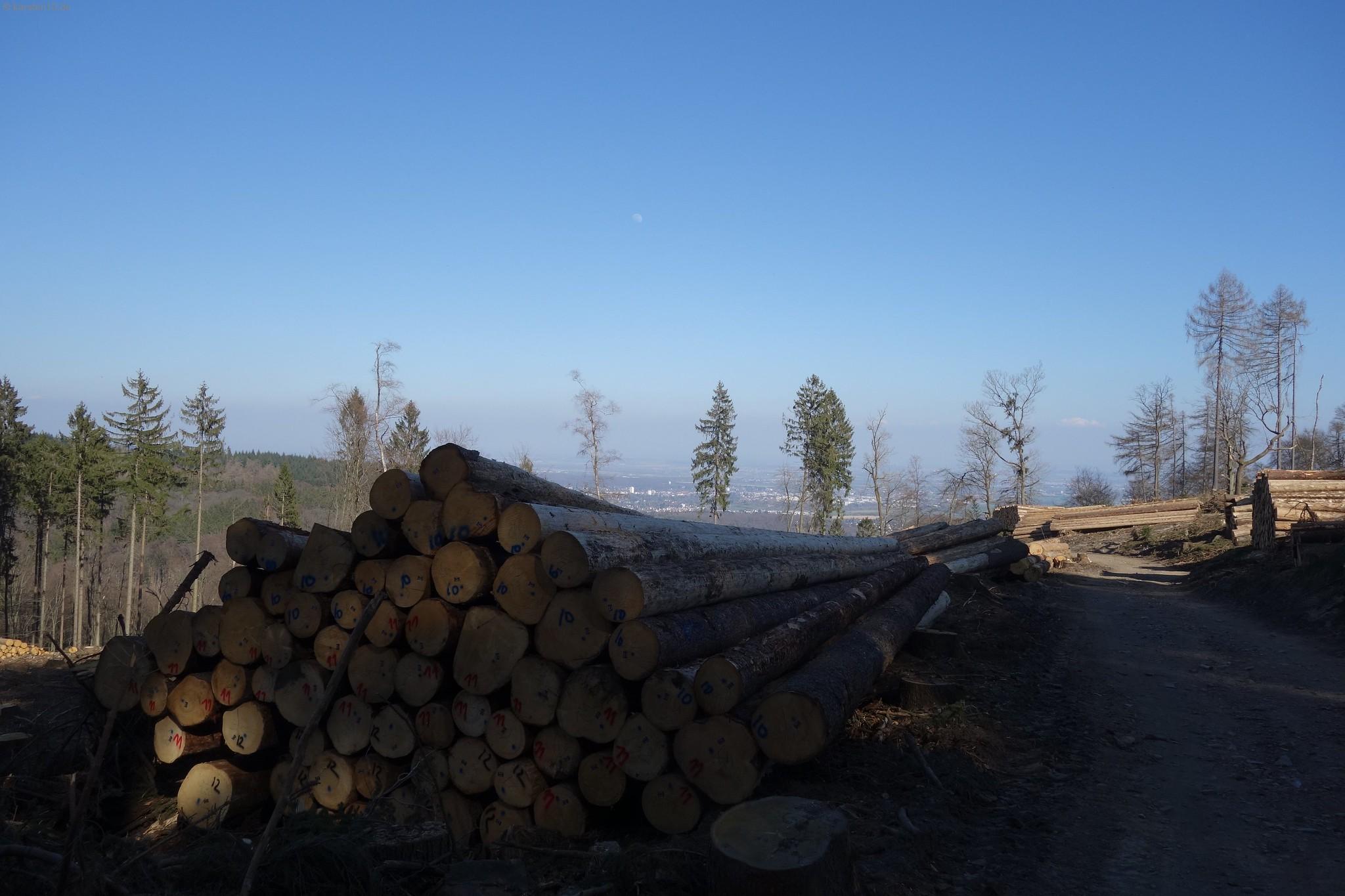 Covid-19 im Wald