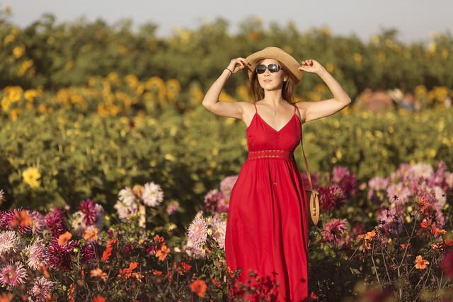 Sunflower field Richmond