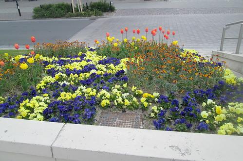 Planting, Warnemünde