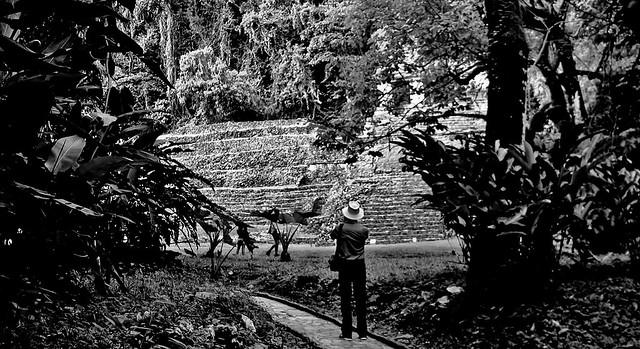 MEXICO, Historisches Highlight - die Mayastätte Palenque , 19639/12543
