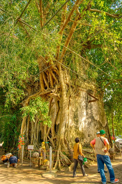Buddha shrine overgrown by a strangler fig tree near Amphawa in Samut Songkhram province in Thailand