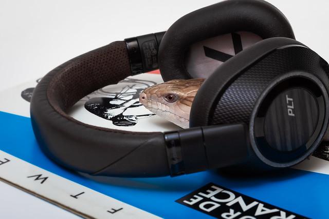 Your Taste in Music Skinks