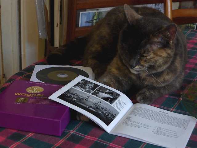 Nouche, Mother in law cat's,  discover and listen Wagner.