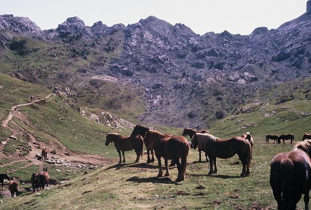 Caballos Zuriza