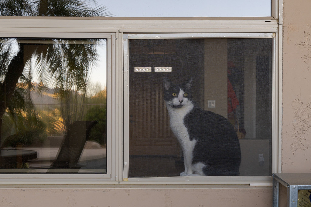 Our cat Boo sits in the open window of our living room in Scottsdale, Arizona in March 2020