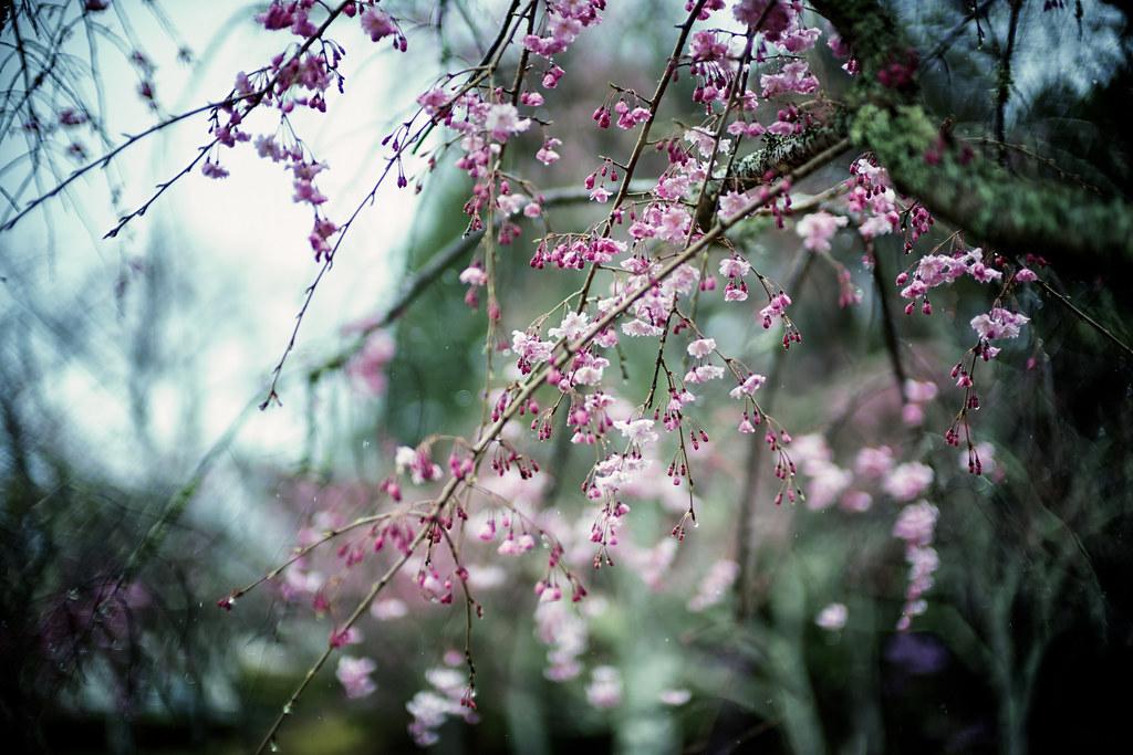 L1003950D3桜3