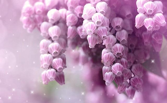 Spring in pink. A Slider :-)