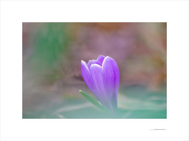 Una primavera en la memoria