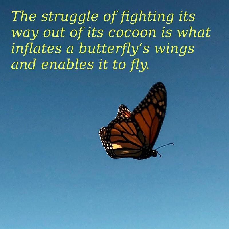 Butterfly Struggle