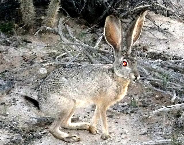 Friendly rabbit