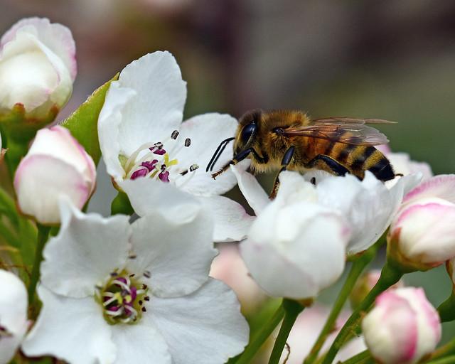 811_7302. Honeybee