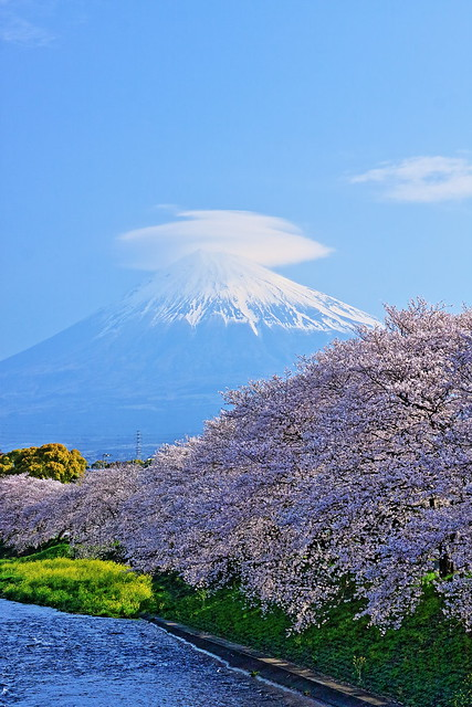 Mt. Fuji & Cherry Blossoms At Ryugenbuchi