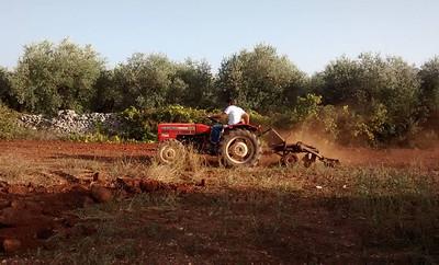 aratura-agricoltura