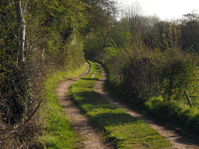green down the lane