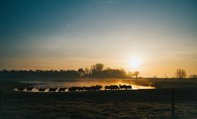 Old mornings dawn