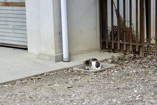 Today's Cat@2020ー04ー05