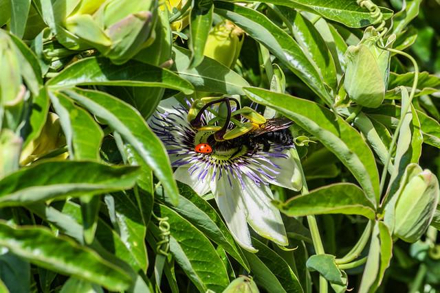 Lady Bug and Bumble Bee