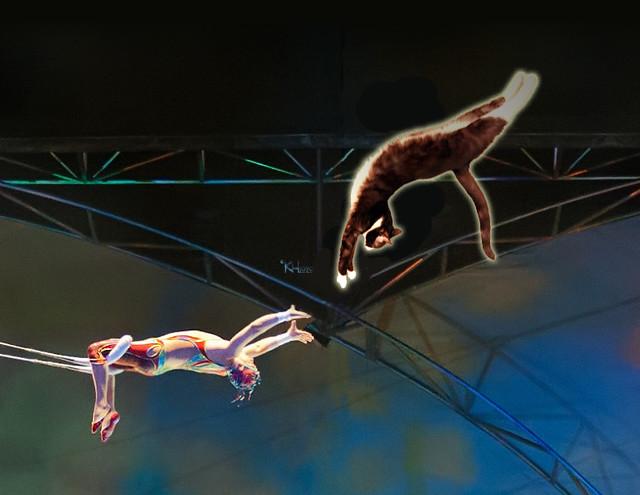 Yoda-cirque-trapeeze
