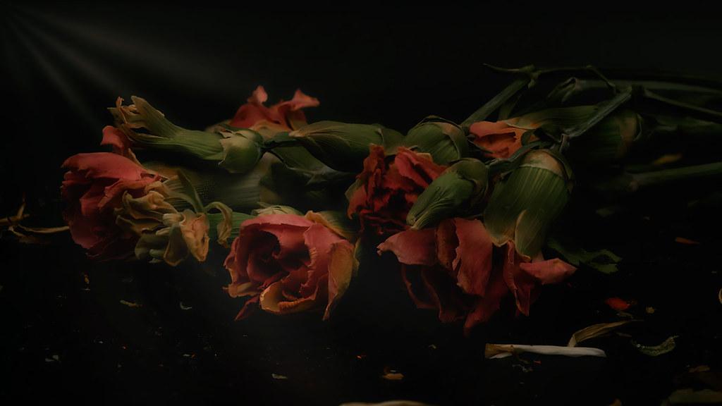 macro flowers lightbox