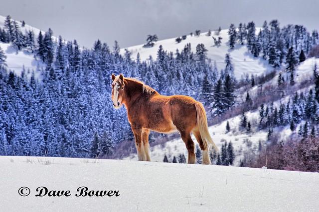 Lone Rangers Horse