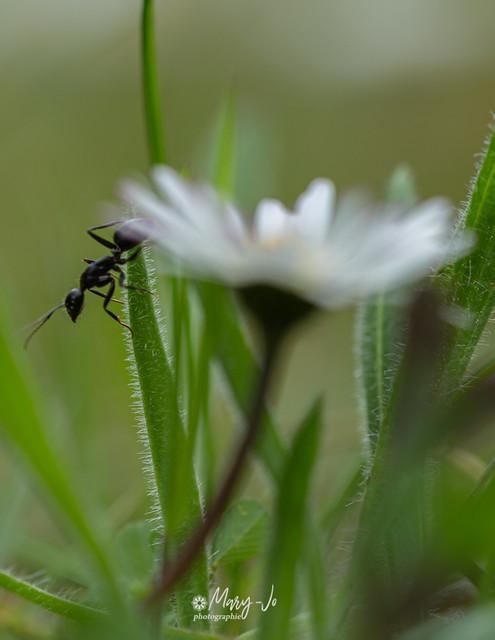 L'équilibre de la fourmi ...   The balance of the ant ...