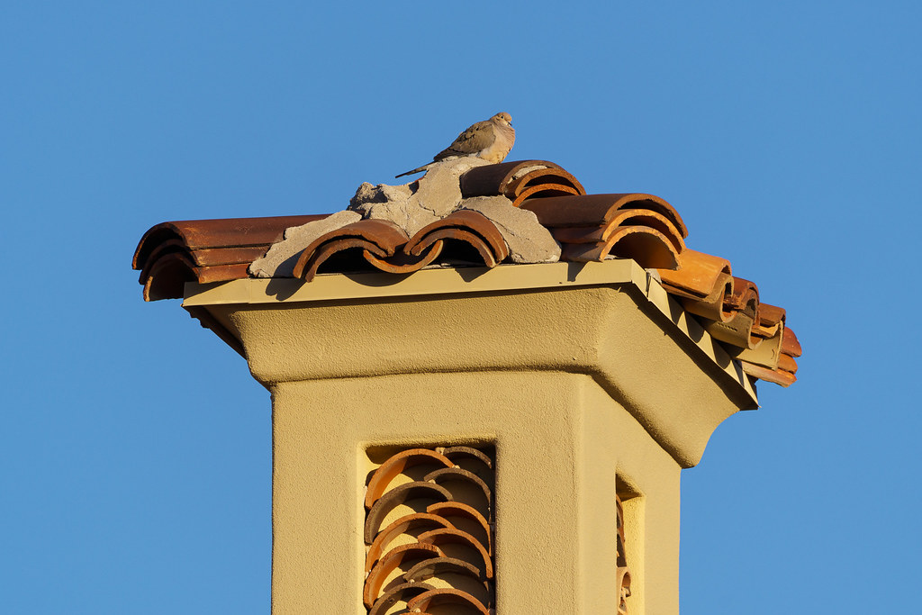 A mourning dove perches atop a tall part of a house in the Troon neighborhood of Scottsdale, Arizona in March 2020