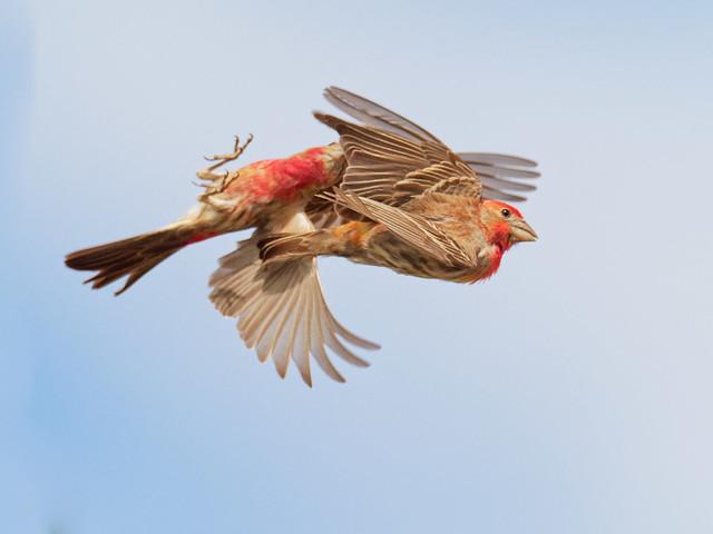 Finch fight
