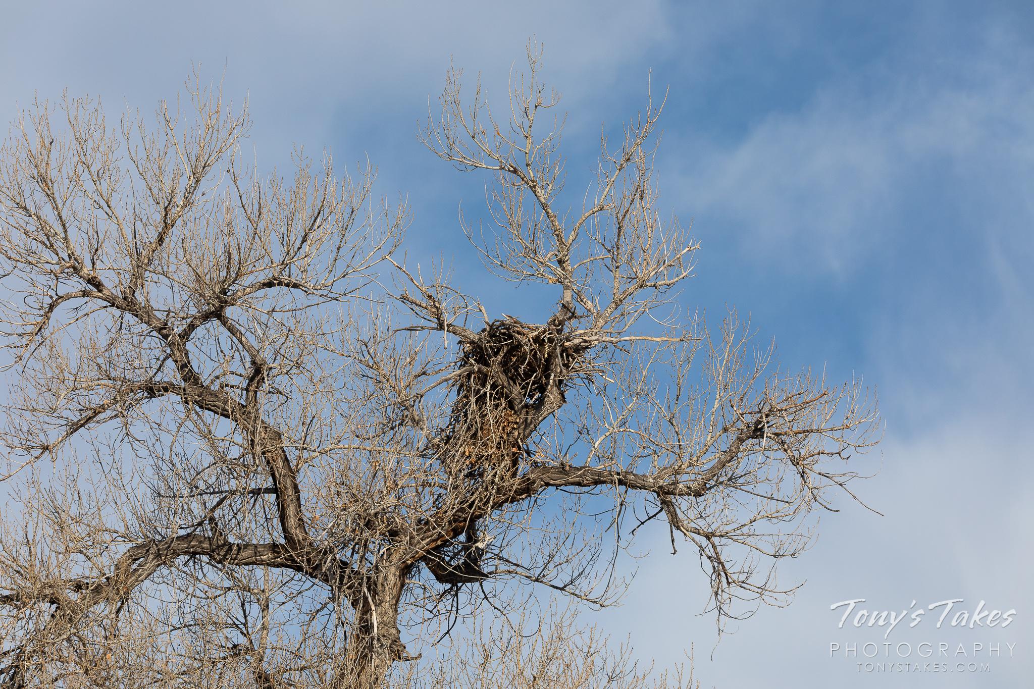 A bald eagle nest sits empty after a failed season. (© Tony's Takes)