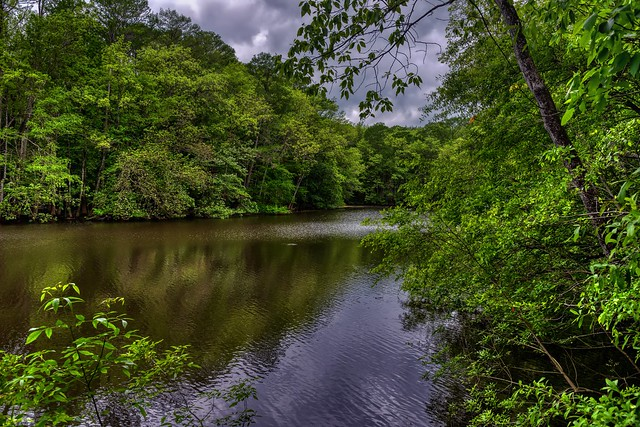 An Image Created from a Single RAW Image with Aurora HDR Pro (Congaree National Park)