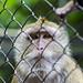 "<p><a href=""https://www.flickr.com/people/187787517@N03/"">adam_photographs04</a> posted a photo:</p>  <p><a href=""https://www.flickr.com/photos/187787517@N03/49740684613/"" title=""Monkey""><img src=""https://live.staticflickr.com/65535/49740684613_7a9414da0b_m.jpg"" width=""240"" height=""160"" alt=""Monkey"" /></a></p>"