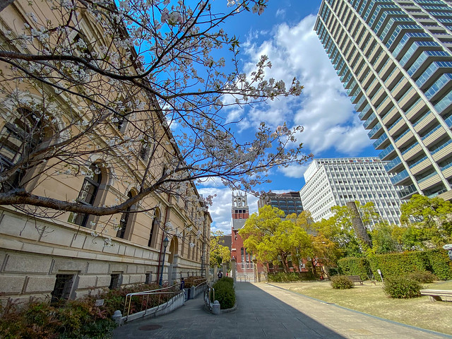 Sakura and The Church