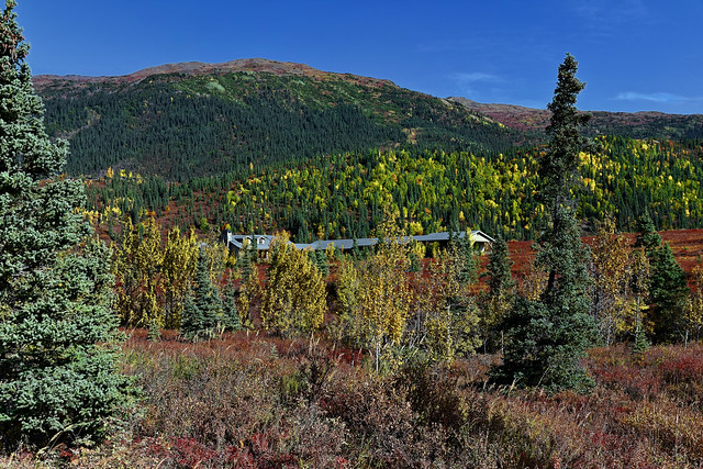 The North Face Lodge Setting in Amongst the Forest and Mountains of Denali National Park & Preserve