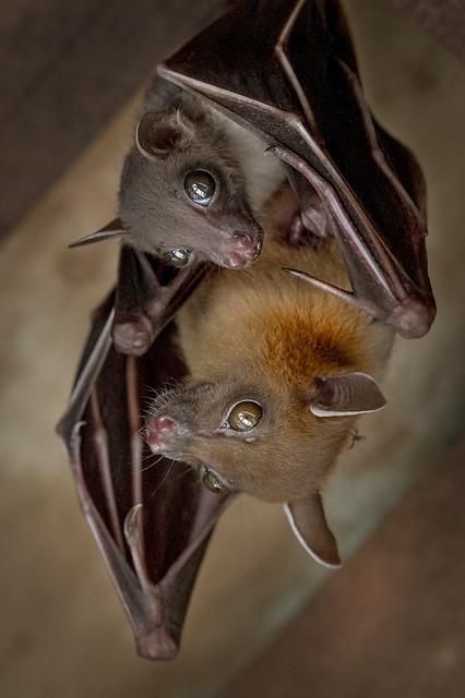 s 05042020_Bats_DSC_3667