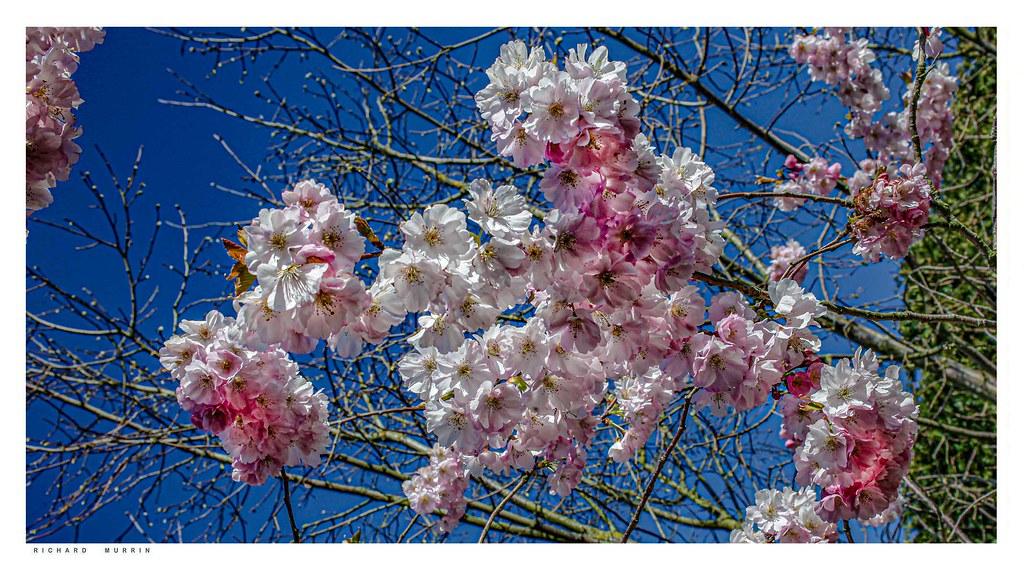 More blossom.