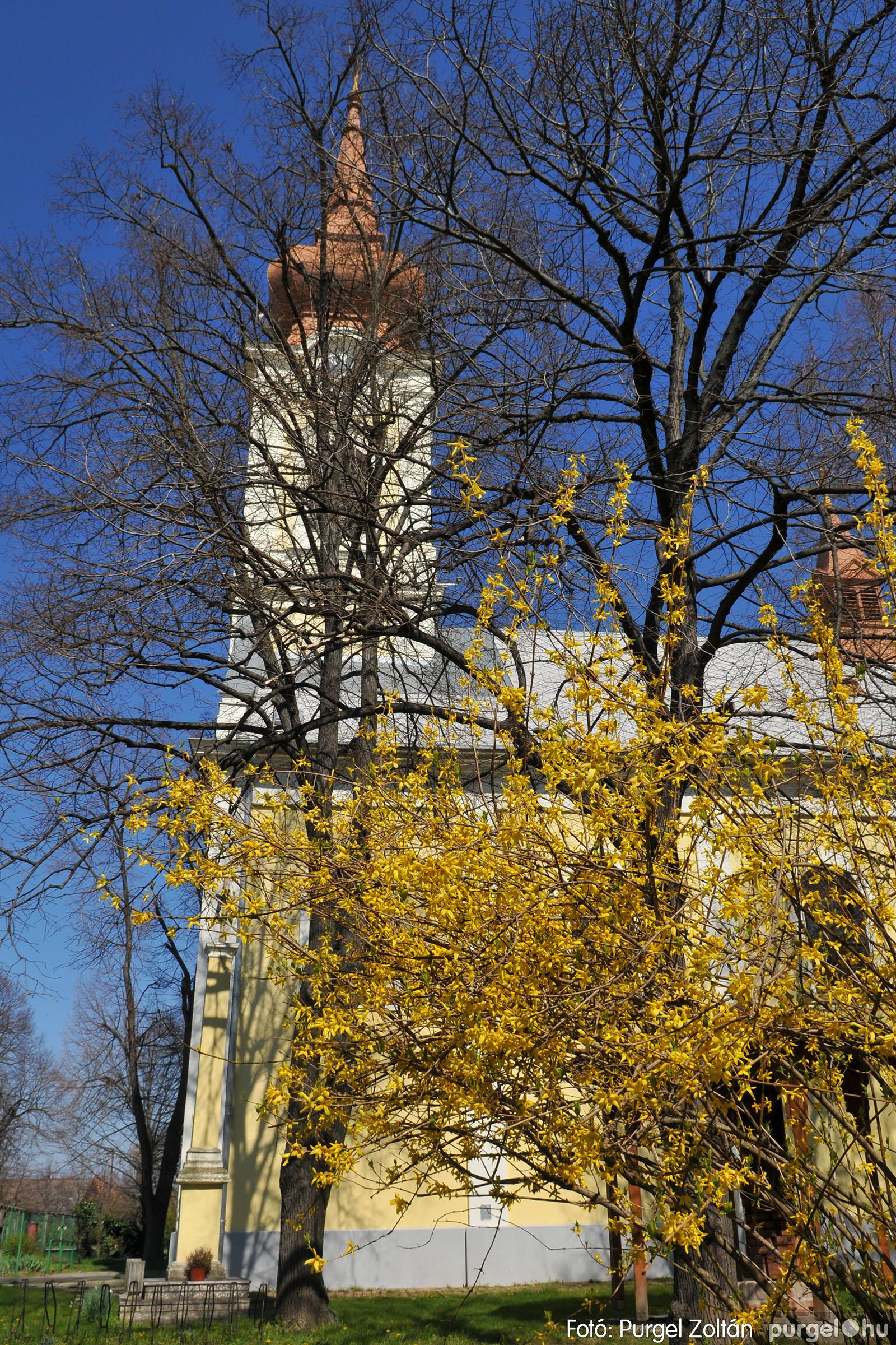 2020.04.03. 019 Szegváron járt a tavasz - Fotó:PURGEL ZOLTÁN© D3K_6635q.jpg