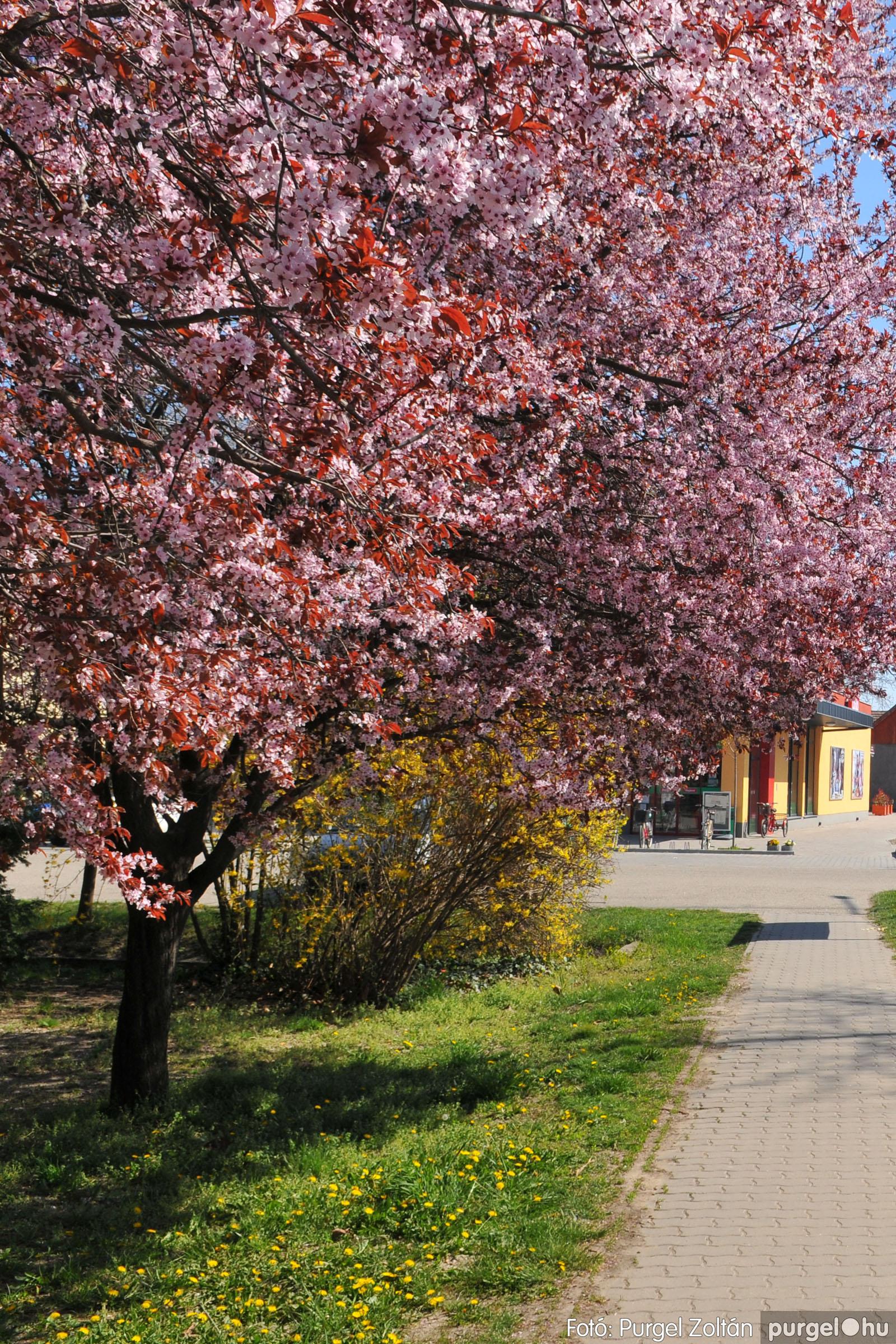 2020.04.03. 012 Szegváron járt a tavasz - Fotó:PURGEL ZOLTÁN© D3K_6619q.jpg