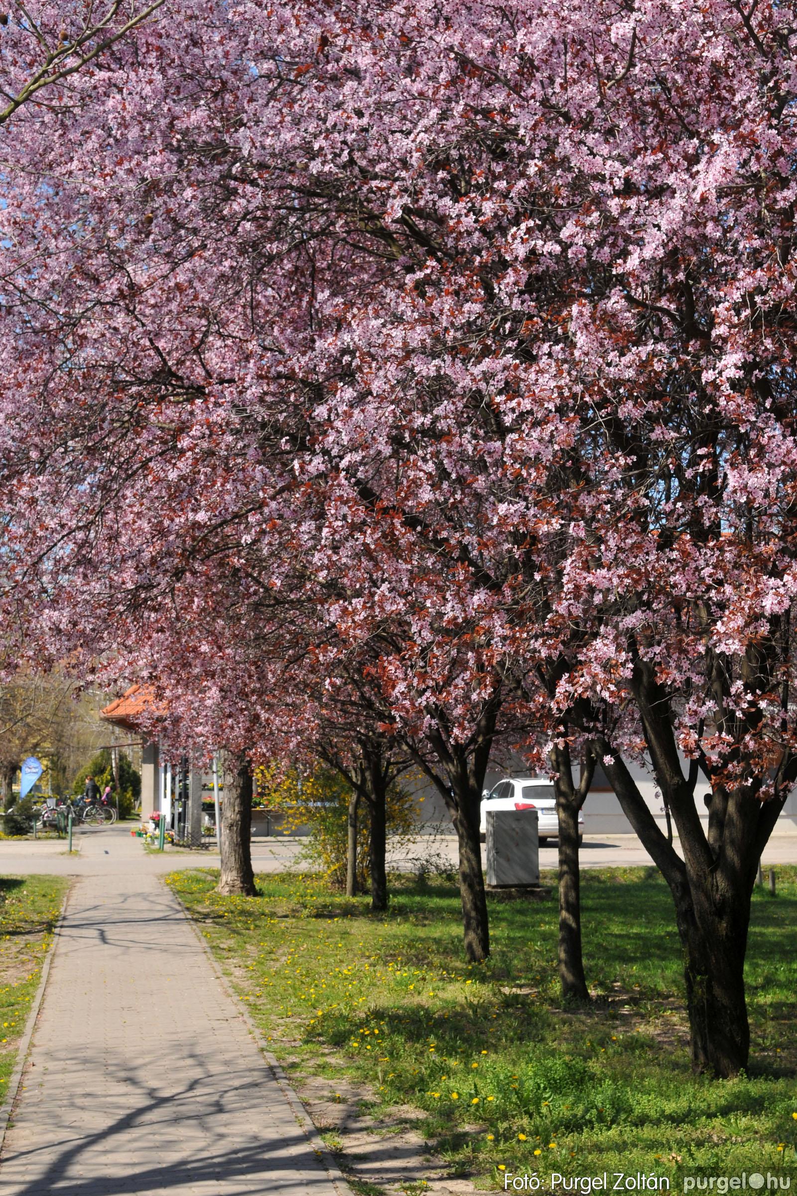 2020.04.03. 010 Szegváron járt a tavasz - Fotó:PURGEL ZOLTÁN© D3K_6615q.jpg