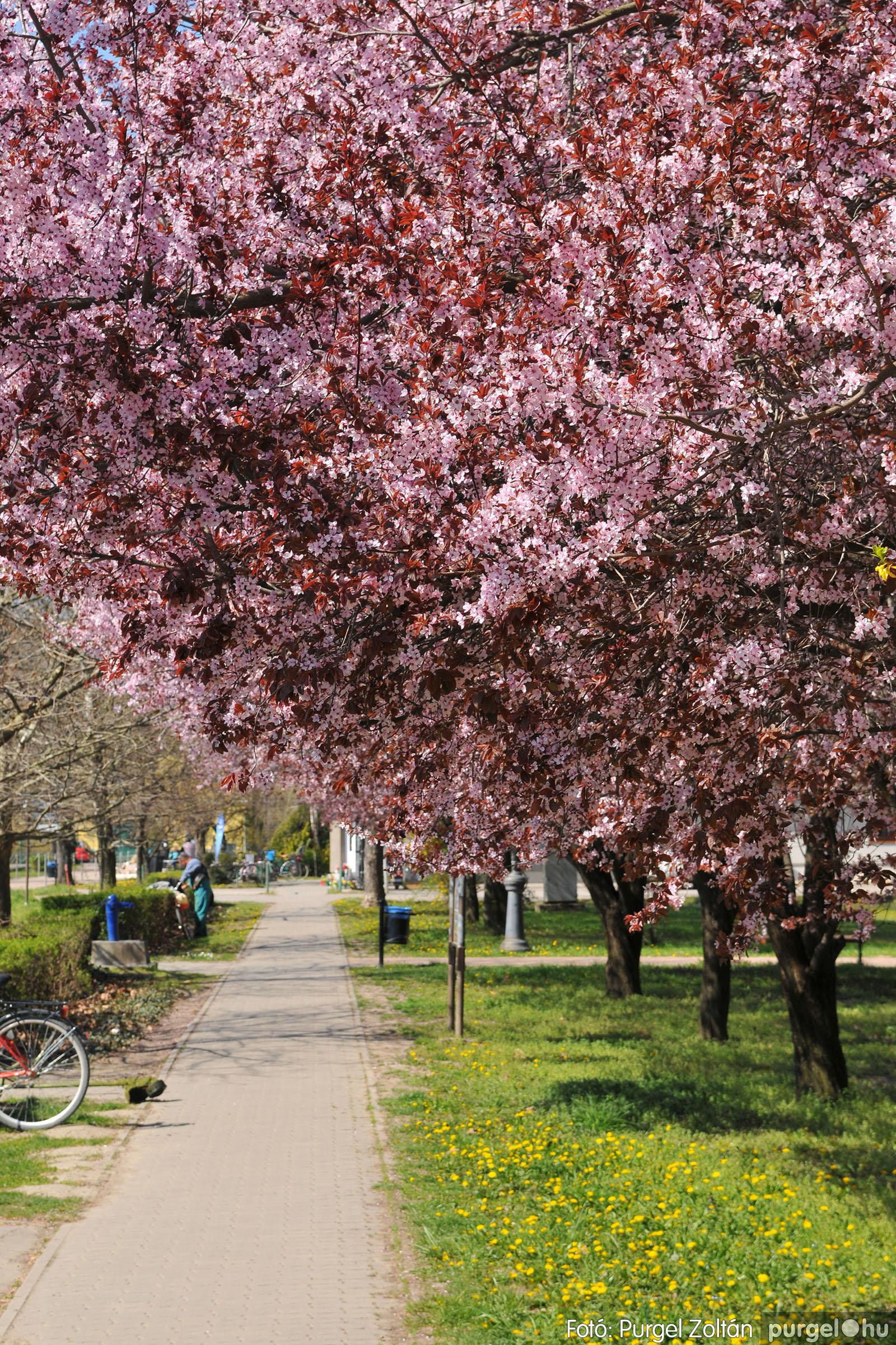 2020.04.03. 009 Szegváron járt a tavasz - Fotó:PURGEL ZOLTÁN© D3K_6614q.jpg