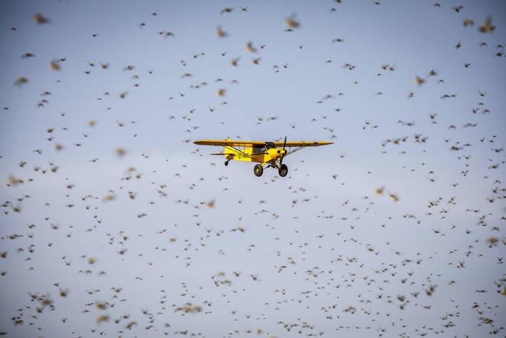 武漢肺炎疫情迫使各國政府關閉邊境,減少貨運航班,並打亂了全球供應鏈。照片來源:FAO/Sven Torfinn