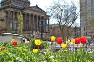Tulips in front of the Harris at Preston | by Tony Worrall