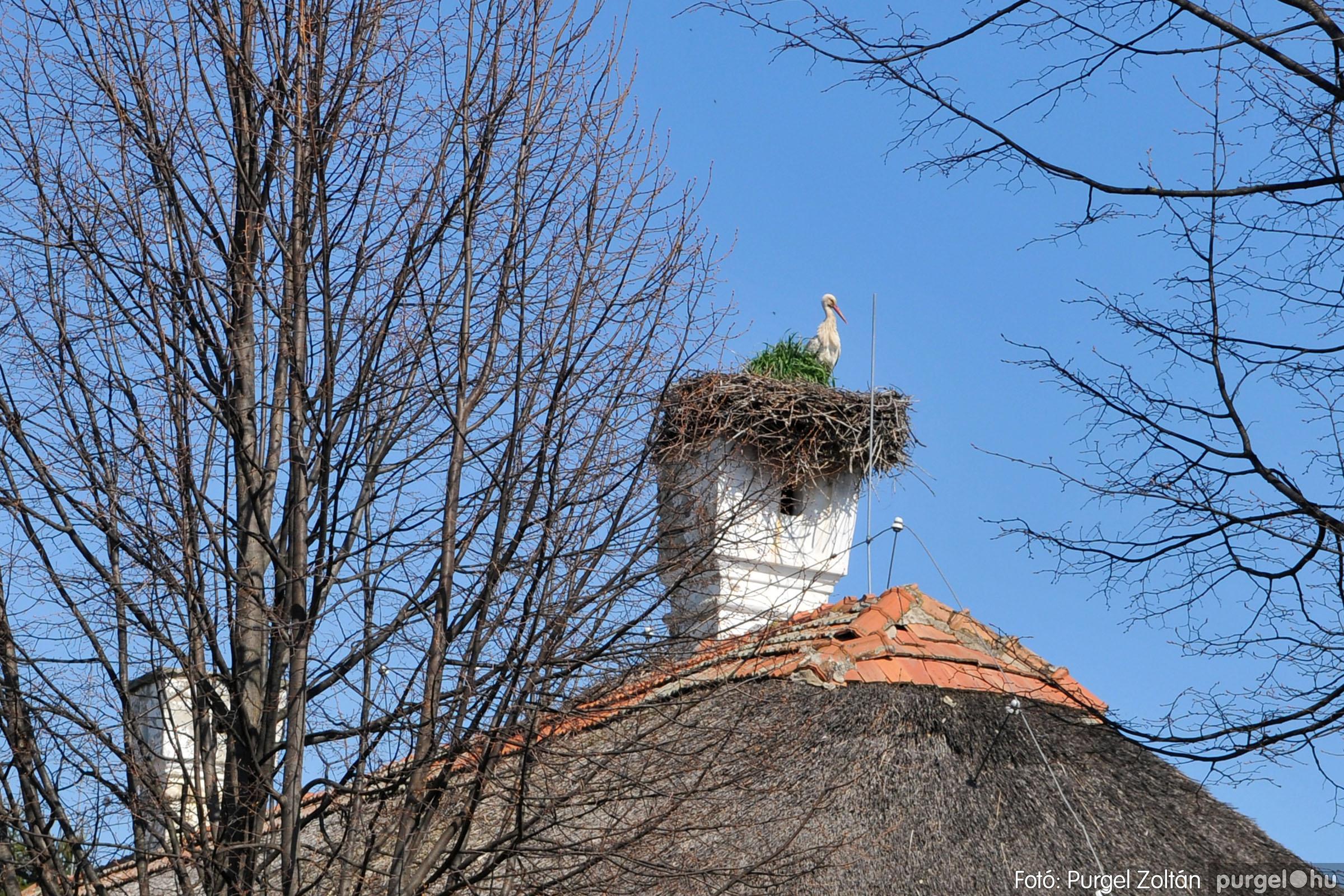2020.04.03. 017 Szegváron járt a tavasz - Fotó:PURGEL ZOLTÁN© D3K_6632q.jpg