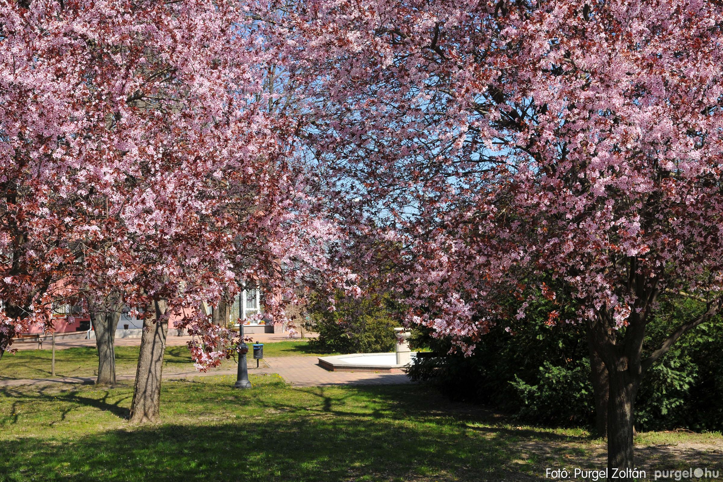 2020.04.03. 013 Szegváron járt a tavasz - Fotó:PURGEL ZOLTÁN© D3K_6620q.jpg