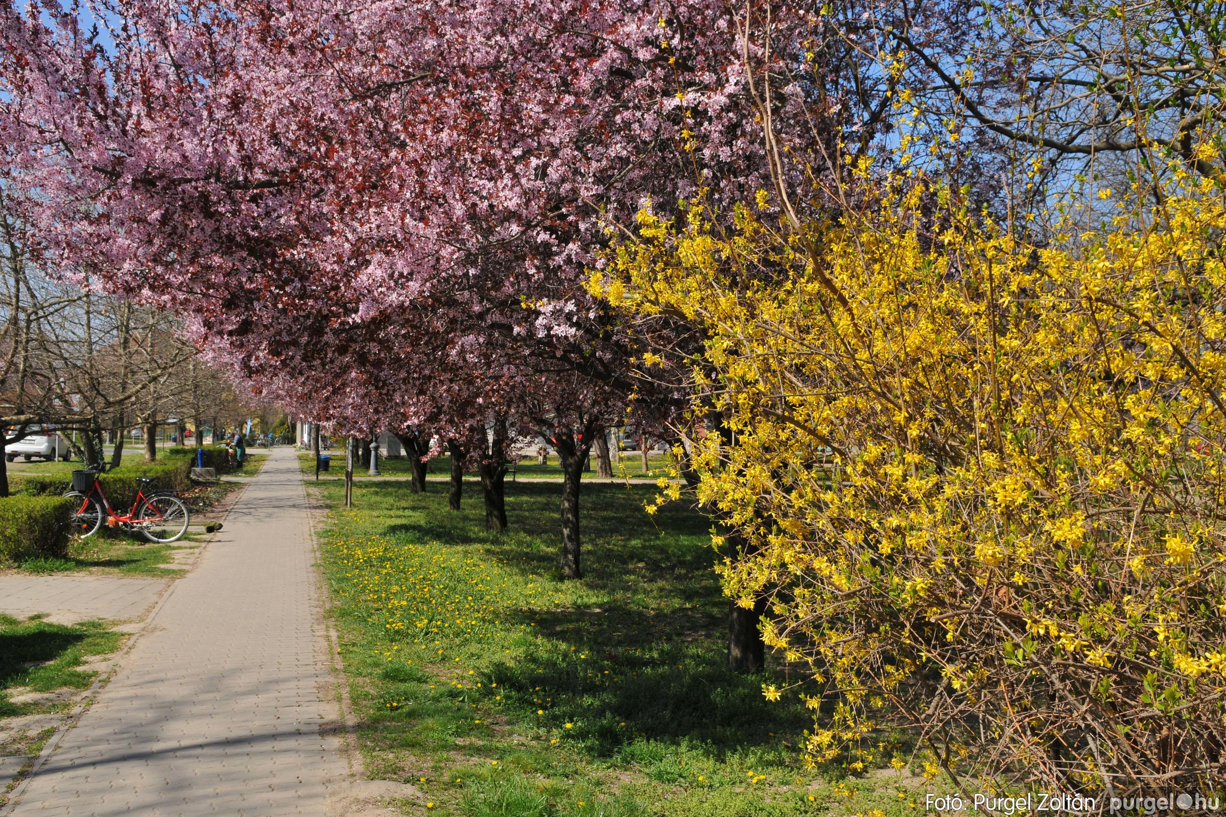 2020.04.03. 008 Szegváron járt a tavasz - Fotó:PURGEL ZOLTÁN© D3K_6613q.jpg